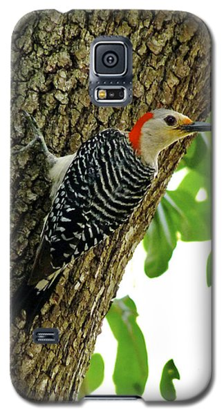 Red-bellied Woodpecker. Galaxy S5 Case