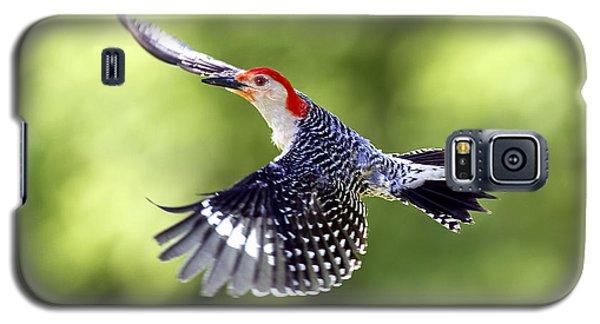 Red-bellied Woodpecker Flight Galaxy S5 Case by David Lester