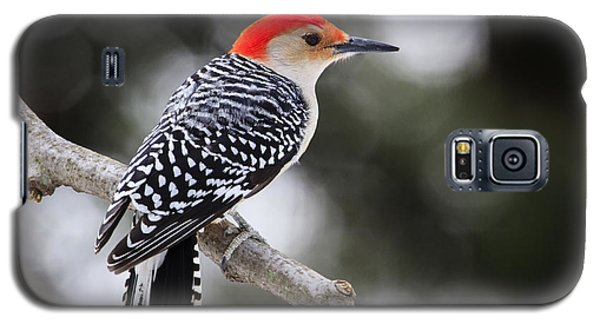 Red-bellied Woodpecker Galaxy S5 Case by Gary Hall