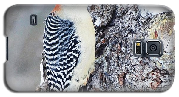 Red Bellied Woodpecker Galaxy S5 Case