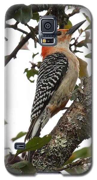 'red-bellied Woodpecker' Melanerpes Carolinus  Galaxy S5 Case