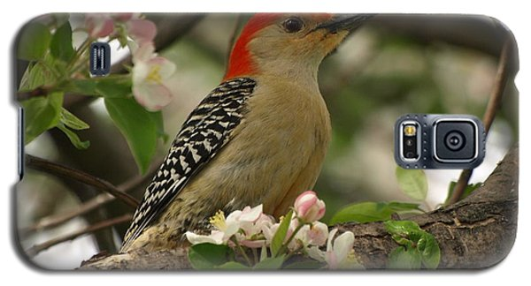 Galaxy S5 Case featuring the photograph Red-bellied Woodpecker by James Peterson