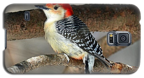 Red-bellied Woodpecker Galaxy S5 Case by Rodney Campbell