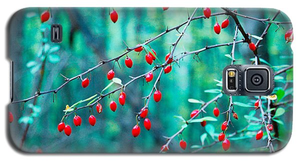 Red Berries In October Galaxy S5 Case