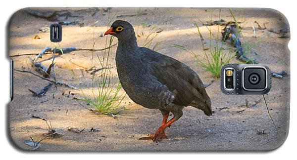 Red Billed Francolin Galaxy S5 Case