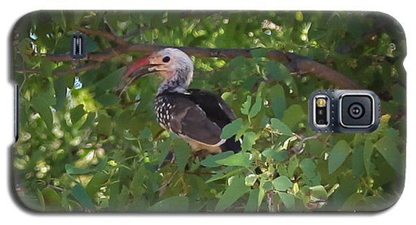 Red Billed Hornbill Galaxy S5 Case