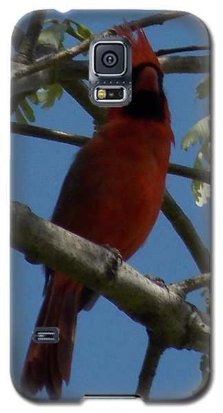 Red Bird 1 Galaxy S5 Case