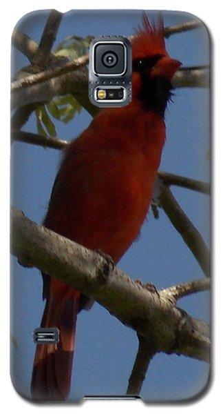 Red Bird 2 Galaxy S5 Case