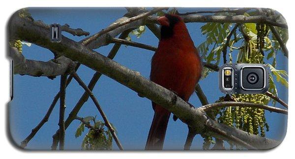 Red Bird 3 Galaxy S5 Case