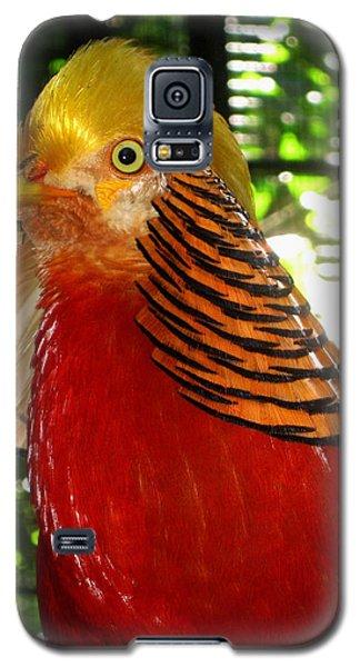 Red Bird Galaxy S5 Case by Pamela Walton