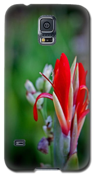 Galaxy S5 Case featuring the photograph Red Bloom by Jean Haynes