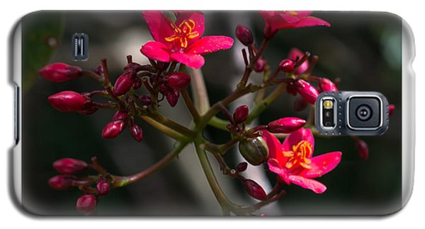 Red Jatropha Blossoms Galaxy S5 Case