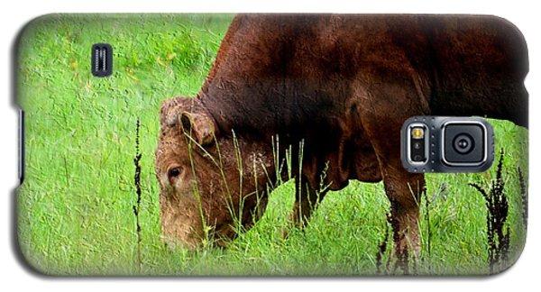 Red Brangus Bull Galaxy S5 Case by Maria Urso