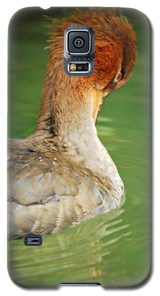 Red Breasted Merganser Galaxy S5 Case