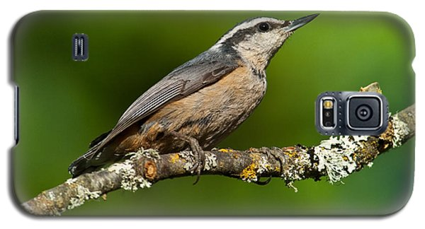 Red Breasted Nuthatch In A Tree Galaxy S5 Case