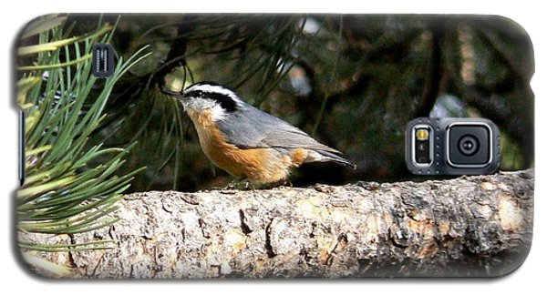 Red-breasted Nuthatch In Pine Tree Galaxy S5 Case by Marilyn Burton