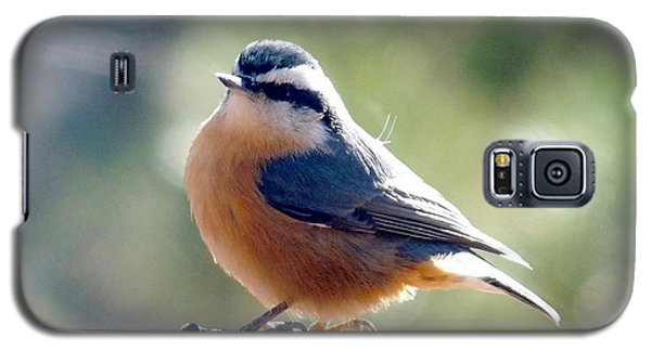 Red-breasted Nuthatch Galaxy S5 Case by Marilyn Burton