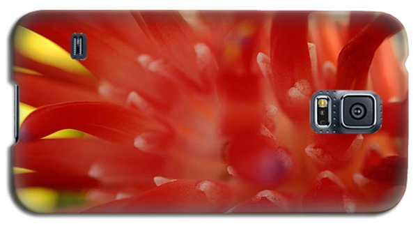 Galaxy S5 Case featuring the photograph Red Bromeliad by Greg Allore