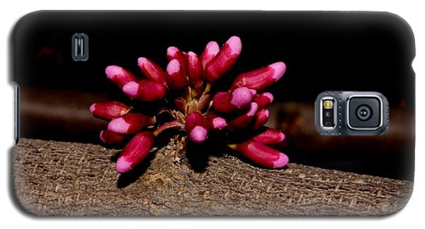 Red Bud Buds Galaxy S5 Case