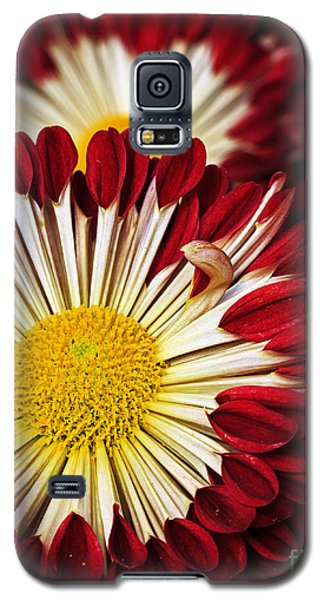 Red Burst Galaxy S5 Case