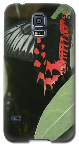 Galaxy S5 Case featuring the photograph Red Butterfly by Robert Nickologianis