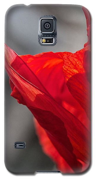Red Canna Galaxy S5 Case