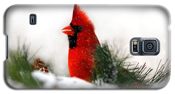 Red Cardinal Galaxy S5 Case