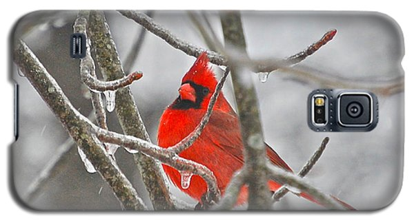 Red Cardinal Northern Bird Galaxy S5 Case