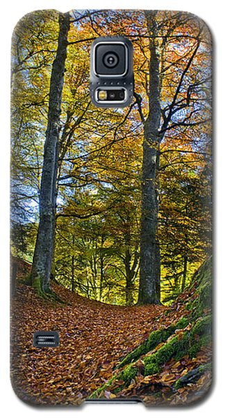 Red Carpet In Reelig Glen During Autumn Galaxy S5 Case