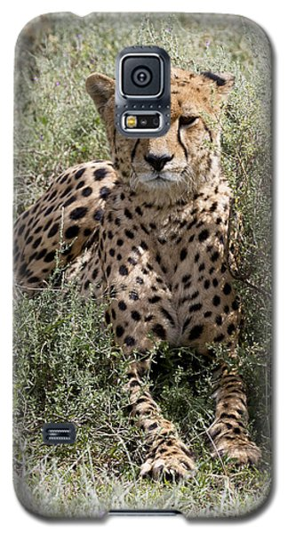 Galaxy S5 Case featuring the photograph Red Cheetah Portrait by Chris Scroggins
