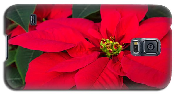 Red Christmas Beauty Galaxy S5 Case