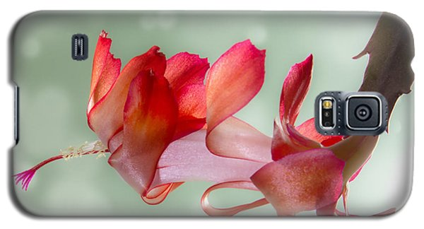 Red Christmas Cactus Bloom Galaxy S5 Case