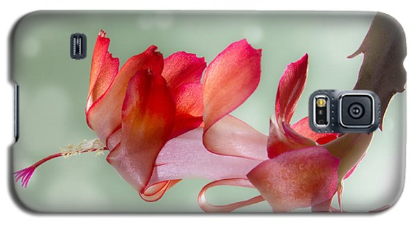 Red Christmas Cactus Bloom Galaxy S5 Case by Patti Deters