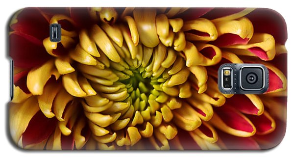 Red Chrysanthemum Galaxy S5 Case by Matt Malloy