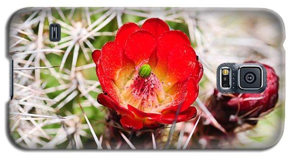 Red Claret Cup Cactus Galaxy S5 Case