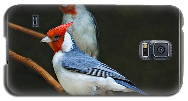 Red-crested Cardinal Galaxy S5 Case by Walter Herrit