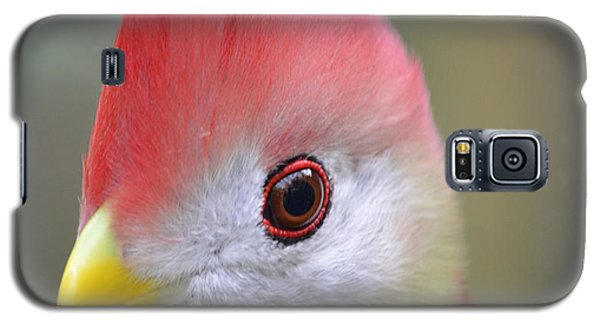 Red Crested Turaco Galaxy S5 Case