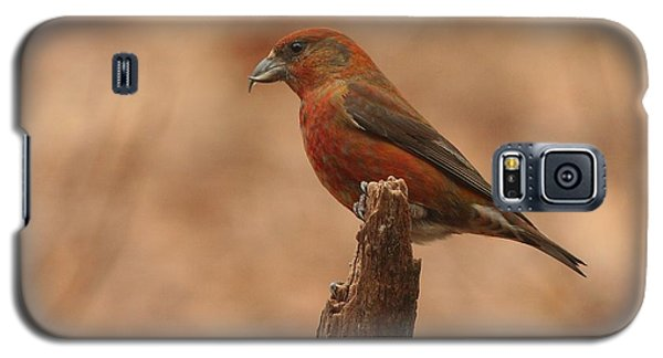 Red Crossbill Galaxy S5 Case