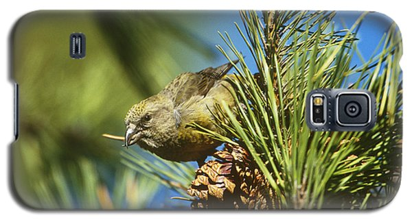 Red Crossbill Eating Cone Seeds Galaxy S5 Case