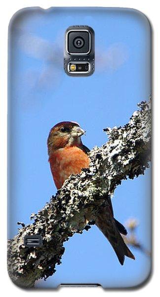 Red Crossbill Finch Galaxy S5 Case