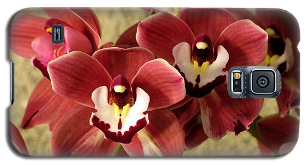Galaxy S5 Case featuring the photograph Red Cymbidium Orchid by Alfred Ng