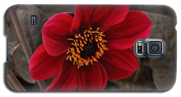 Red Dahlia Galaxy S5 Case
