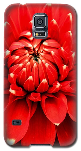 Galaxy S5 Case featuring the photograph Red Dahlia With White Tips by E Faithe Lester