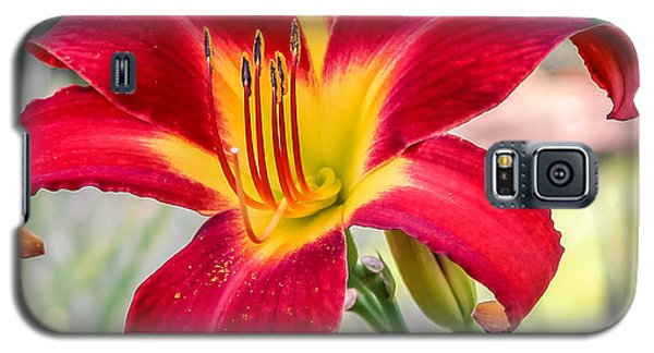 Galaxy S5 Case featuring the photograph Red Daylily by Rob Sellers