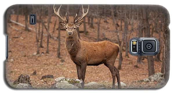 Red Deer Galaxy S5 Case