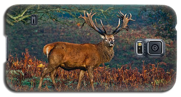 Red Deer Stag In Woodland Galaxy S5 Case by Scott Carruthers