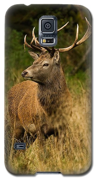 Red Deer Stag Galaxy S5 Case by Paul Scoullar