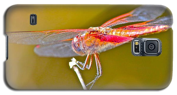 Galaxy S5 Case featuring the photograph Red Dragonfly by Cyril Maza