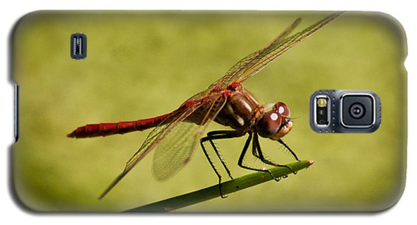 Galaxy S5 Case featuring the photograph Red Dragonfly by Janis Knight