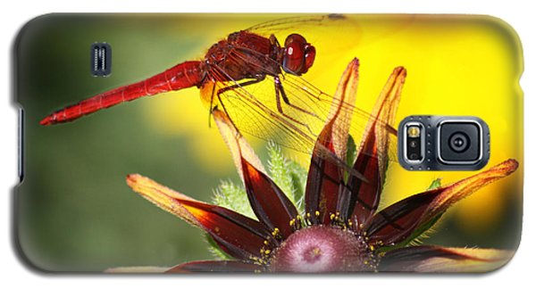 Galaxy S5 Case featuring the photograph Red Dragonfly by Martina  Rathgens